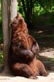 η αμερικανική πλάτη αντέχει το Μαύρο το τρίψιμό του στοκ φωτογραφίες