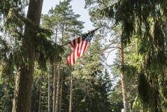 Η αμερικανική σημαία είναι συνδεμένη με ένα δέντρο, η ΑΜΕΡΙΚΑΝΙΚΗ σημαία τίθεται σε ένα δάσος πεύκων, μια ηλιόλουστη ημέρα με ένα Στοκ Φωτογραφίες
