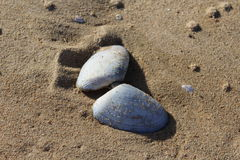 Η αμμώδης Shell σε μια παραλία Στοκ φωτογραφία με δικαίωμα ελεύθερης χρήσης