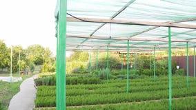 Η ανάπτυξη καλλιέργησε τα σπορόφυτα σε ένα μικρό αγρόκτημα, κάτω από μια τεχνητή πράσινη σκηνή φιλμ μικρού μήκους