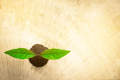 Η αναγέννηση του δέντρου σε ξύλινο Στοκ εικόνες με δικαίωμα ελεύθερης χρήσης
