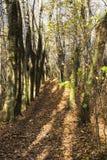 Η αναμμένη αλέα πάρκων φθινοπώρου ήλιος στοκ εικόνα
