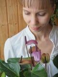 Η αναπαραγωγή των εσωτερικών εγκαταστάσεων Ο θηλυκός κηπουρός κρατά anthurium το λουλούδι Στοκ εικόνα με δικαίωμα ελεύθερης χρήσης