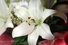 η ανασκόπηση ανθίζει το στιλπνό κρίνο δύο λευκό Στοκ Φωτογραφίες