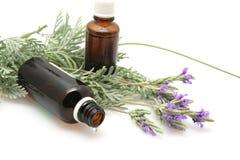 η ανασκόπηση ανθίζει lavender το &lam Στοκ Φωτογραφίες