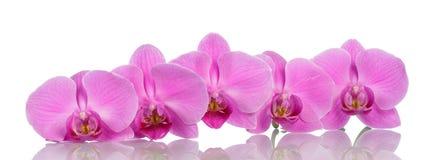 η ανασκόπηση ανθίζει orchid το λευκό Στοκ Εικόνες