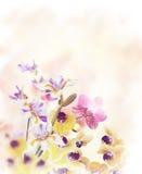 η ανασκόπηση ανθίζει orchid Στοκ Εικόνα