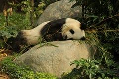 η ανασκόπηση αντέχει το λευκό ύφους panda απεικόνισης κινούμενων σχεδίων Στοκ φωτογραφίες με δικαίωμα ελεύθερης χρήσης