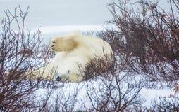 η ανασκόπηση αντέχει το λευκό Στοκ φωτογραφία με δικαίωμα ελεύθερης χρήσης