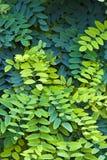 η ανασκόπηση βγάζει φύλλα Στοκ Εικόνες