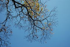 η ανασκόπηση διακλαδίζεται δέντρο ουρανού Στοκ Φωτογραφίες