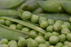 η ανασκόπηση εξοφλείει εφάπαξ λευκό λοβών πράσινων μπιζελιών Στοκ Εικόνες