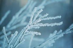 η ανασκόπηση εύκολη επιμελείται τη φύση εικόνας στο διανυσματικό χειμώνα 33c ural χειμώνας θερμοκρασίας της Ρωσίας τοπίων Ιανουαρ Στοκ Εικόνα