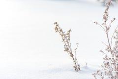 η ανασκόπηση εύκολη επιμελείται τη φύση εικόνας στο διανυσματικό χειμώνα λουλούδι παγωμένο Στοκ Φωτογραφία