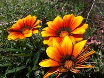 η ανασκόπηση εύκολη επιμελείται το διάνυσμα λουλουδιών Στοκ φωτογραφία με δικαίωμα ελεύθερης χρήσης