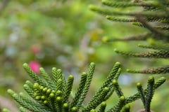 η ανασκόπηση θόλωσε πράσινο Στοκ Εικόνες