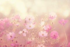 η ανασκόπηση θόλωσε floral Λουλούδια κόσμου Στοκ εικόνα με δικαίωμα ελεύθερης χρήσης