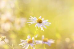 η ανασκόπηση θόλωσε floral Στοκ Εικόνες