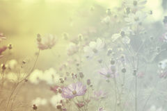 η ανασκόπηση θόλωσε floral Στοκ φωτογραφία με δικαίωμα ελεύθερης χρήσης