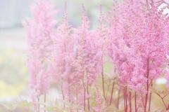 η ανασκόπηση θόλωσε floral Στοκ εικόνες με δικαίωμα ελεύθερης χρήσης