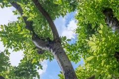 η ανασκόπηση διακλαδίζεται πράσινα φύλλα λιμνών Στοκ Εικόνες