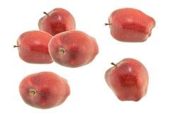 η ανασκόπηση μήλων απομόνωσε το ανοικτό κόκκινο λευκό σκιάς Στοκ φωτογραφία με δικαίωμα ελεύθερης χρήσης