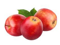 η ανασκόπηση μήλων απομόνωσε το ανοικτό κόκκινο λευκό σκιάς Στοκ Φωτογραφίες