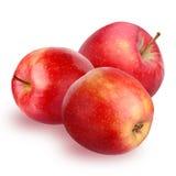 η ανασκόπηση μήλων απομόνωσε το ανοικτό κόκκινο λευκό σκιάς Στοκ Φωτογραφία