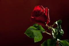 η ανασκόπηση σκούρο κόκκι&n Στοκ Φωτογραφίες