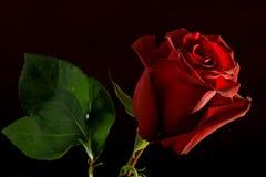 η ανασκόπηση σκούρο κόκκι&n Στοκ φωτογραφία με δικαίωμα ελεύθερης χρήσης