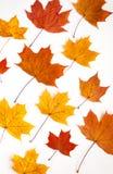 η ανασκόπηση φθινοπώρου αφήνει άσπρος Στοκ Φωτογραφία