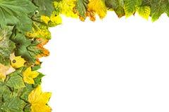 η ανασκόπηση φθινοπώρου αφήνει άσπρος Στοκ εικόνα με δικαίωμα ελεύθερης χρήσης