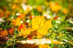 η ανασκόπηση φθινοπώρου εύκολη επιμελείται τη φύση εικόνας στο διάνυσμα Στοκ Εικόνα
