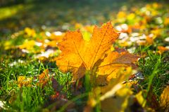 η ανασκόπηση φθινοπώρου εύκολη επιμελείται τη φύση εικόνας στο διάνυσμα Στοκ εικόνες με δικαίωμα ελεύθερης χρήσης
