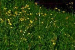 η ανασκόπηση φυσά λουλουδιών χλόης τον πράσινο λόφων αέρα δέντρων λιβαδιών ψηλό κίτρινο Στοκ Φωτογραφία