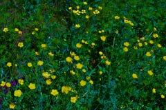 η ανασκόπηση φυσά λουλουδιών χλόης τον πράσινο λόφων αέρα δέντρων λιβαδιών ψηλό κίτρινο στοκ εικόνες