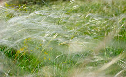 η ανασκόπηση χρωμάτισε floral Στοκ εικόνα με δικαίωμα ελεύθερης χρήσης