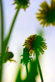 η ανασκόπηση χρωμάτισε floral Στοκ Εικόνες