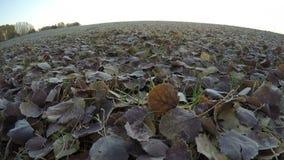 Η ανατολή πέρα από πεσμένος τα φύλλα, χρονικό σφάλμα 4K απόθεμα βίντεο