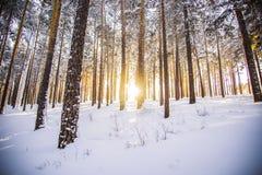 Η ανατολή πρωινού στο χειμερινό δάσος Στοκ φωτογραφίες με δικαίωμα ελεύθερης χρήσης