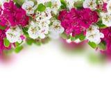 Η ανθίζοντας Apple και λουλούδια δέντρων κερασιών Στοκ εικόνα με δικαίωμα ελεύθερης χρήσης