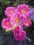 Η ανθοδέσμη λουλουδιών αυξήθηκε κήπος μαργαριτών Στοκ Φωτογραφίες