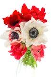 Η ανθοδέσμη του κόκκινου, άσπρου και ρόδινου anemone ανθίζει Στοκ Εικόνες