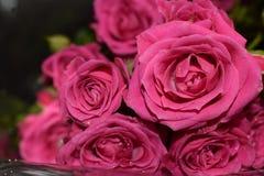 Η ανθοδέσμη των ερυθρών τριαντάφυλλων σε ένα γκρίζο υπόβαθρο, όμορφα λουλούδια με το νερό μειώνεται στοκ φωτογραφίες