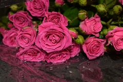 Η ανθοδέσμη των ερυθρών τριαντάφυλλων σε ένα γκρίζο υπόβαθρο, όμορφα λουλούδια με το νερό μειώνεται στοκ εικόνα