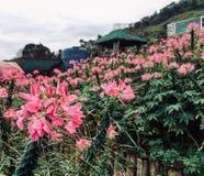 Η ανθοδέσμη των λουλουδιών δεν είναι αρκετά ποτέ στοκ φωτογραφίες με δικαίωμα ελεύθερης χρήσης