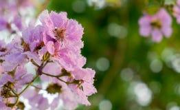 Η ανθοδέσμη λουλουδιών της βασίλισσας Στοκ Φωτογραφία
