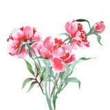 Η ανθοδέσμη των peonies, watercolor, μπορεί να χρησιμοποιηθεί ως ευχετήρια κάρτα, κάρτα πρόσκλησης για το γάμο, διάνυσμα γενεθλίω ελεύθερη απεικόνιση δικαιώματος