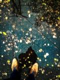 Η αντανάκλαση από τα leafes Στοκ Εικόνες