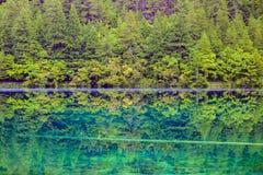 Η αντανάκλαση του δάσους Στοκ εικόνες με δικαίωμα ελεύθερης χρήσης